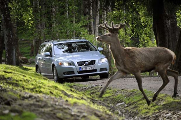 Read about the Autos.ca Northern Exposure: Car vs. Moose